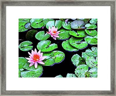 Water Lillies -- Inspired By Monet-1 Framed Print