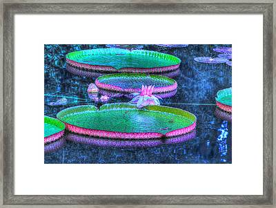 Flower 15 Framed Print