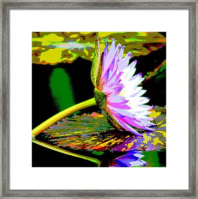 Water Lilly Framed Print by Dieter  Lesche