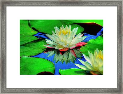 Water Lilly Framed Print