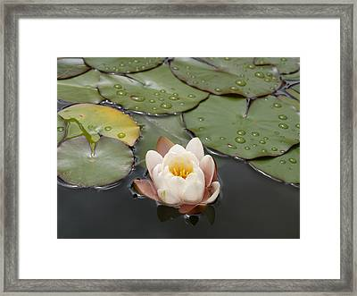 Framed Print featuring the photograph Water Lilly by Haleh Mahbod