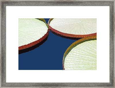 Water Lilly Platters Framed Print