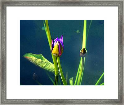 Water Lily 005 Framed Print