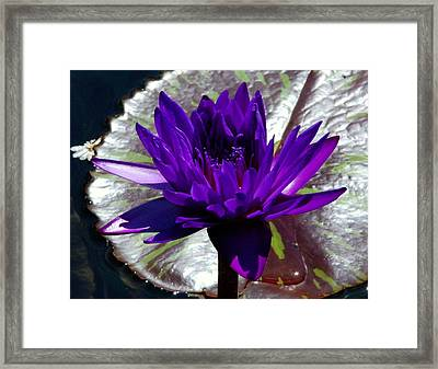 Water Lily 008 Framed Print