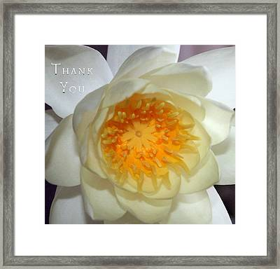 Water Lily 2  And A Reminder To Utter The Words Thank You.  Framed Print