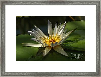 Framed Print featuring the photograph Water Lily 2 by Rudi Prott