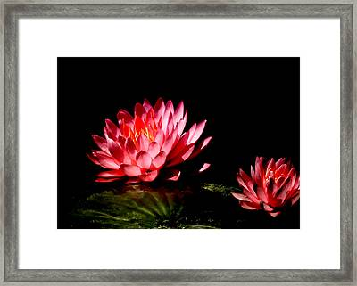 Water Lily 5 Framed Print