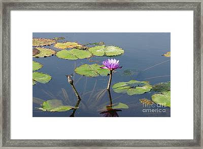 Water Lily And Dragon Fly One Framed Print