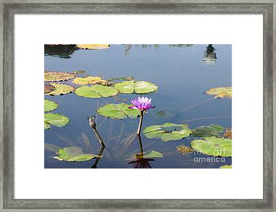 Water Lily And Dragon Fly Two Framed Print