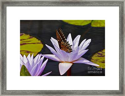 Water Lily And Swallowtail Butterfly Framed Print