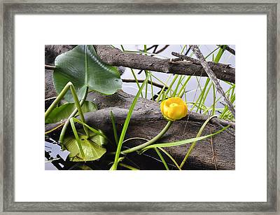 Framed Print featuring the photograph Water Lily by Cathy Mahnke