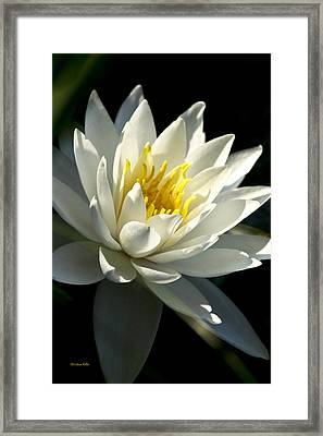 Water Lily Framed Print by Christina Rollo