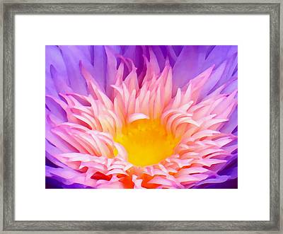Water Lily Close-up Framed Print by Amy Vangsgard