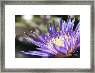 Water Lily Close Up Framed Print by Eyzen M Kim
