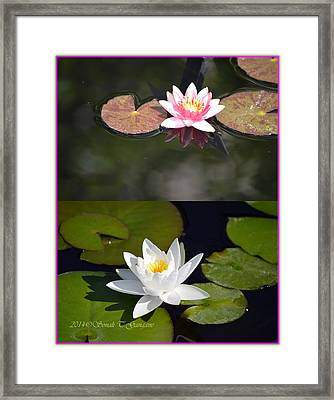 Water Lily Collage Framed Print by Sonali Gangane