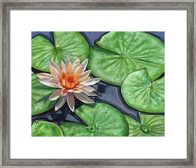 Water Lily Framed Print by David Stribbling