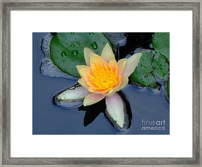 Water Lily Framed Print by Deborah DeLaBarre