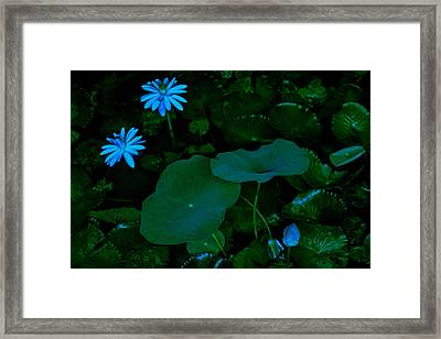 Water Lily Framed Print by Donald Chen