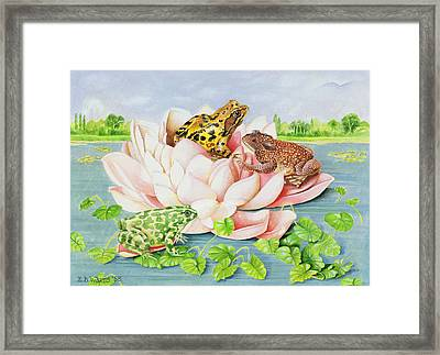 Water Lily Framed Print by EB Watts