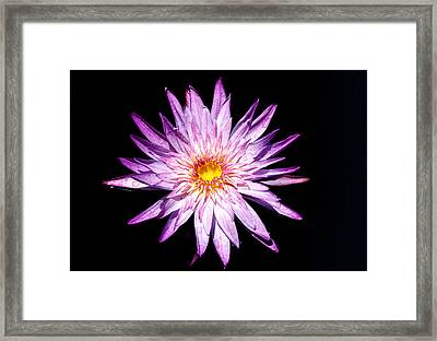 Water Lily. Framed Print