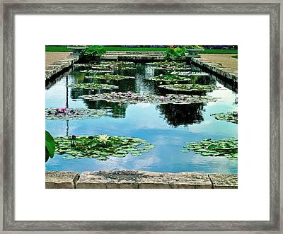 Water Lily Garden Framed Print by Zafer Gurel