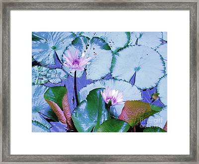 Water Lily II Framed Print by Ann Johndro-Collins