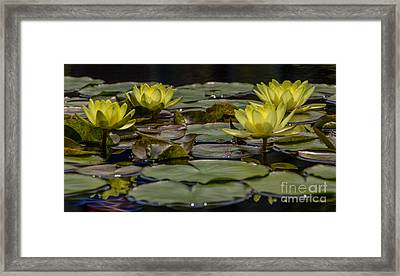 Water Lily II Framed Print by Ursula Lawrence