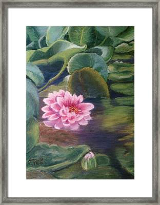 Framed Print featuring the pastel Water Lily In Bloom  Pastel by Antonia Citrino