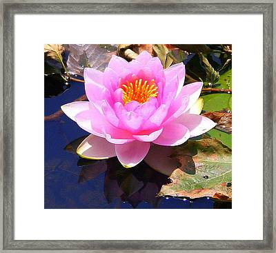 Water Lily In Pink Framed Print