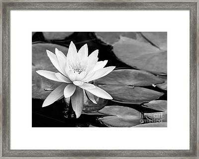 Water Lily In The Lily Pond Framed Print