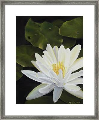 Water Lily Framed Print by Joan Swanson