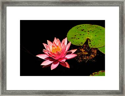 Framed Print featuring the photograph Water Lily by John Johnson
