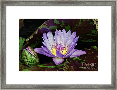 Water Lily Leopardess Framed Print