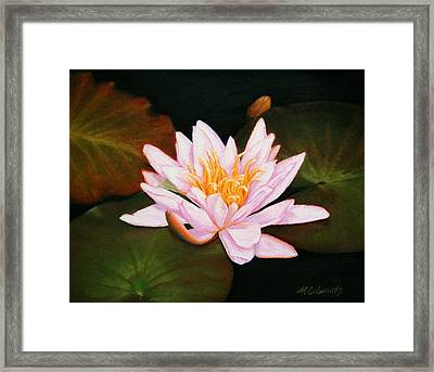Water Lily Framed Print by Marna Edwards Flavell