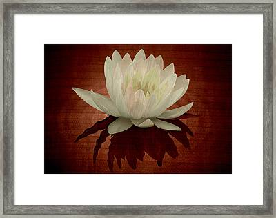 Water Lily Marquetry Framed Print