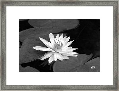 Framed Print featuring the photograph Water Lily On Pad by Phil Mancuso
