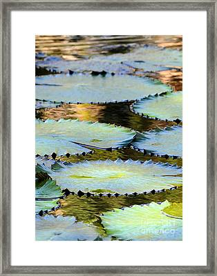 Water Lily Pads In The Morning Light Framed Print by Sabrina L Ryan