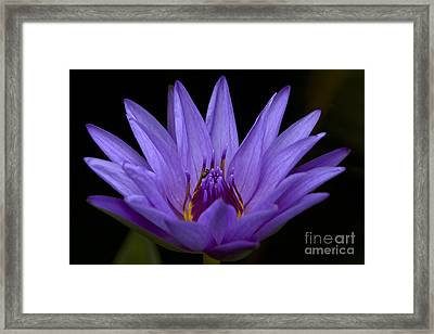 Framed Print featuring the photograph Water Lily Photo by Meg Rousher
