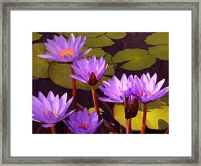 Water Lily Pond Framed Print by Amy Vangsgard