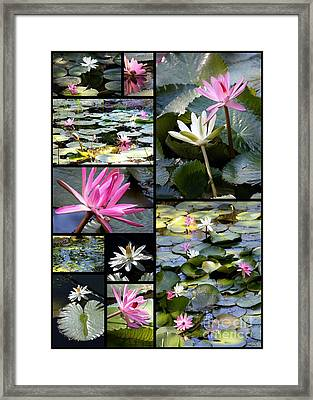 Water Lily Pond Collage Framed Print