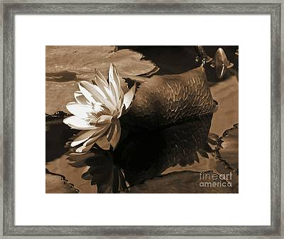 Water Lily Pond Sepia Toned Photo Framed Print by Carol F Austin
