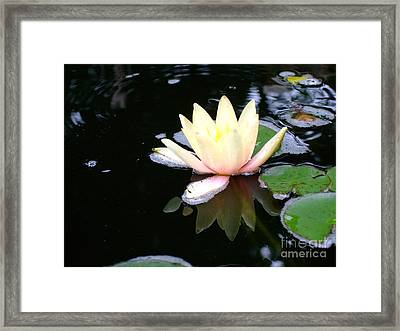 Water Lily Reflection  Framed Print by Deborah DeLaBarre