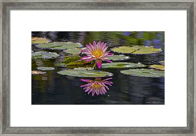 Water Lily Reflection Framed Print by Kathy Ponce