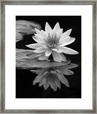 Water Lily Reflections I Framed Print by Dawn Currie