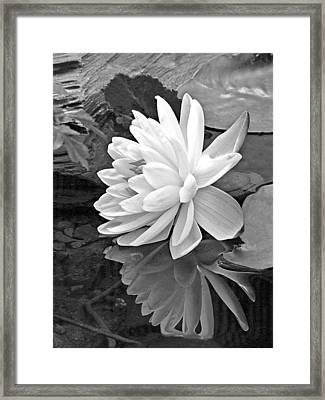 Water Lily Reflections In Black And White Framed Print