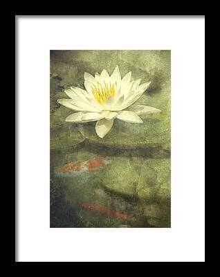White Water Lily Framed Prints