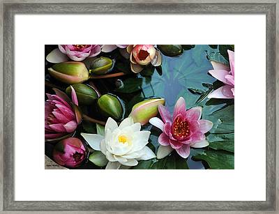 Framed Print featuring the photograph Water Lily Series 1 by Haleh Mahbod