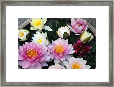 Framed Print featuring the photograph Water Lily Series -2  by Haleh Mahbod