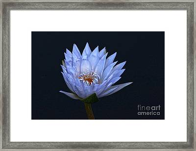 Water Lily Shades Of Blue And Lavender Framed Print