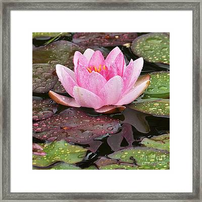 Water Lily Framed Print by Simona Ghidini